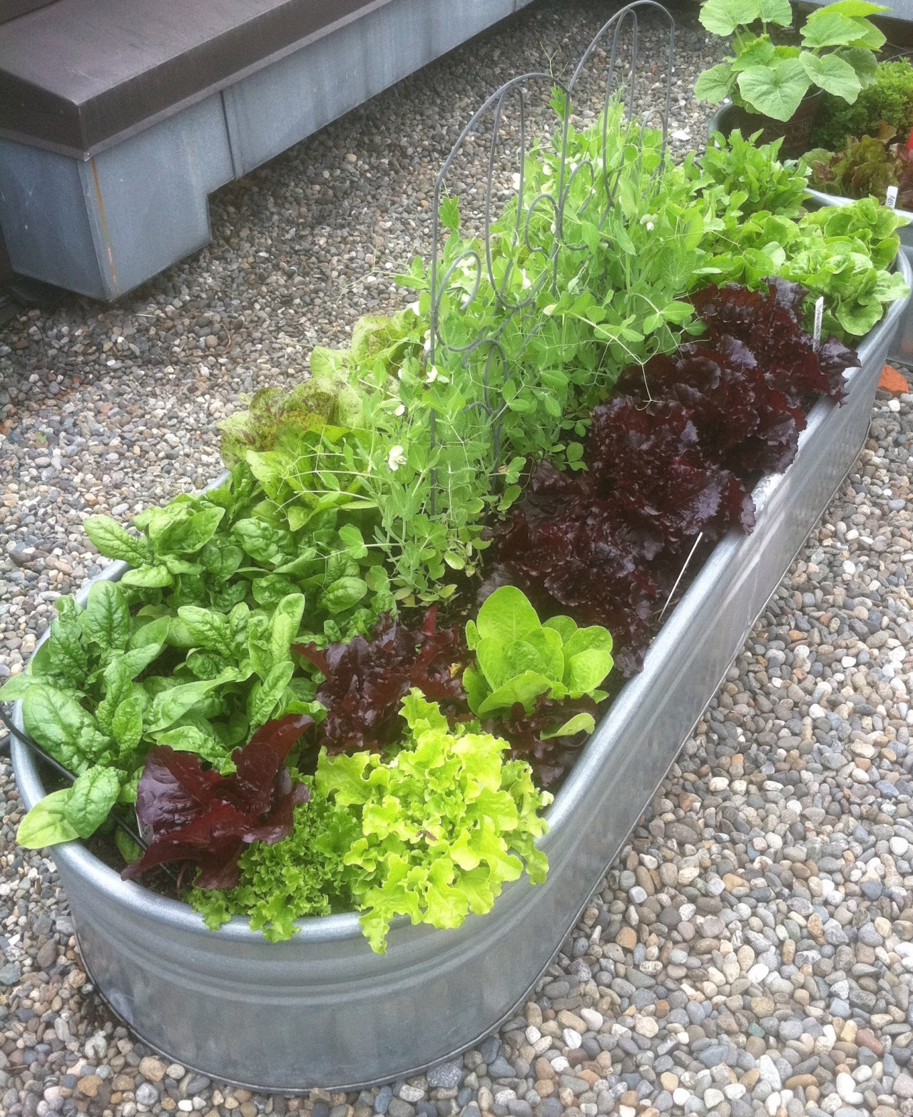Rooftop Vegetable Garden. Rooftop Vegetable Garden   currie french landscape design